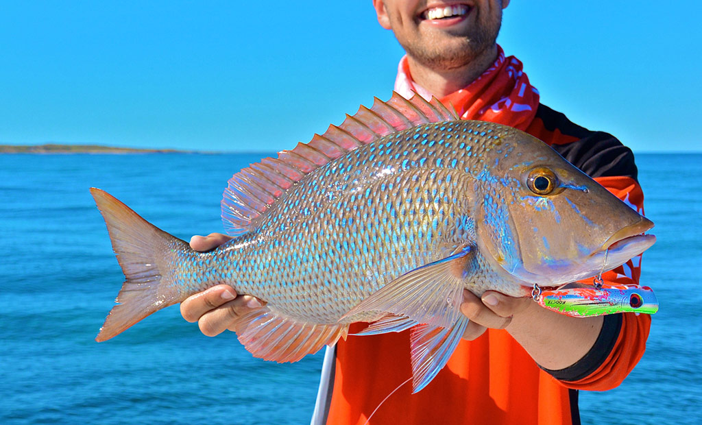 Reef fish for Salt water fishes